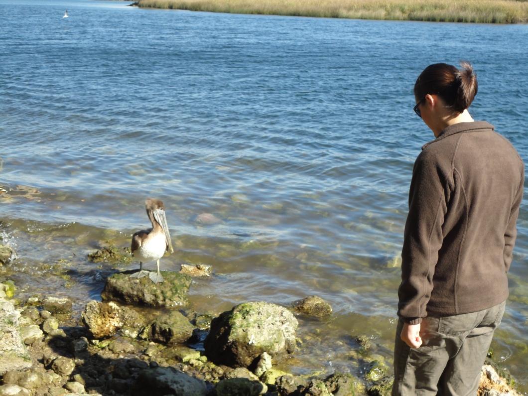 pelican, wakulla river (2)