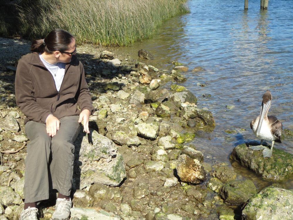 pelican, wakulla river (3)