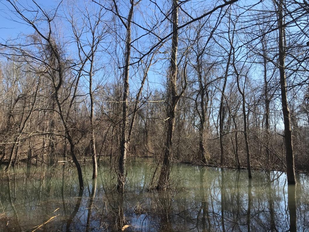 sunny beaver pond