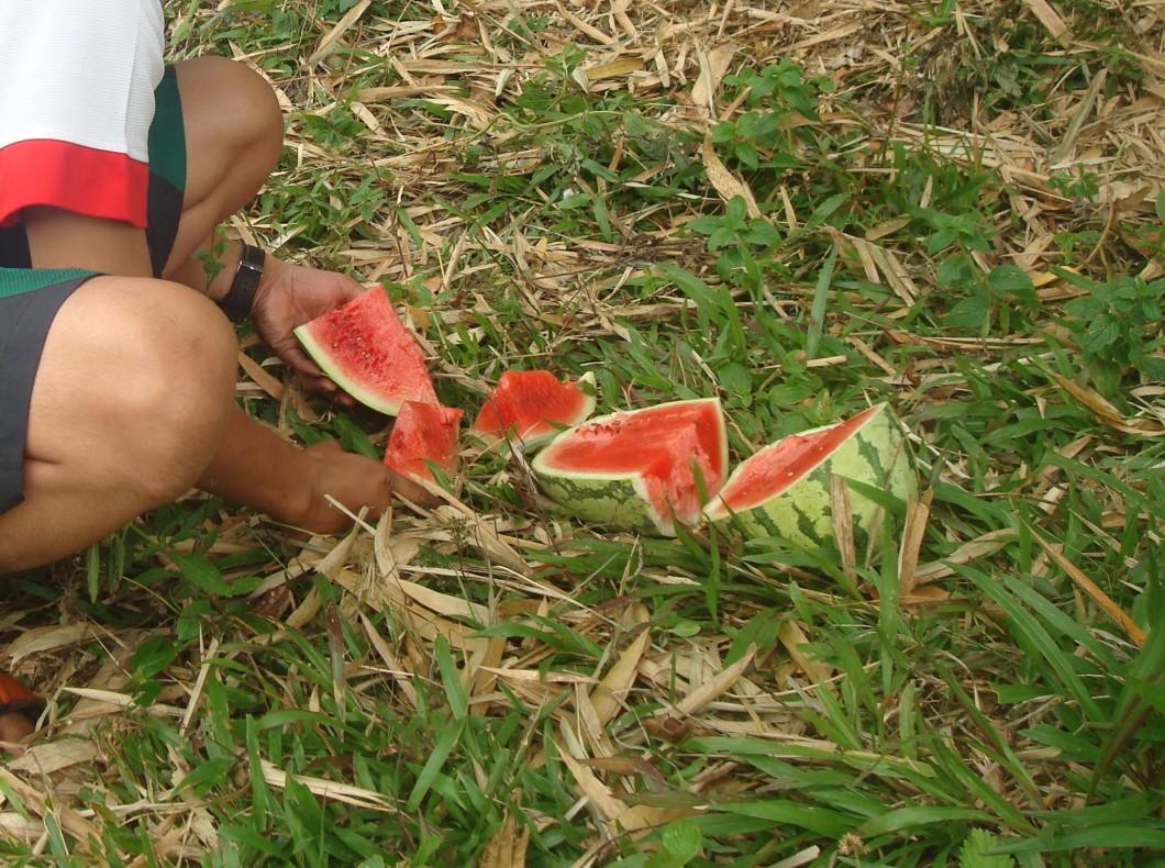 Makan semangka