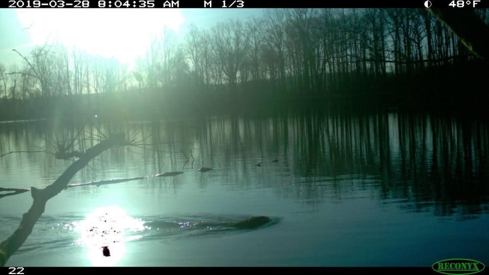 beaver CT photo